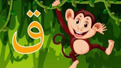 Arabic Alphabet For Kids Qaf Xm1U6Ad6Yqu Image