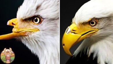 Cet Oiseau A Perdu Son Bec A Cause Dhumains Cruels Ynmmyapt8Qe Image