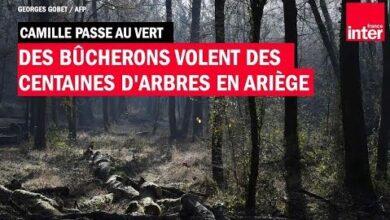 Des Bucherons Volent Des Centaines Darbres En Ariege Camille Passe Au Vert Xad2Iyuxwye Image