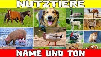 Name Und Ton Der Nutztiere Fur Kinder Bildungs Und Lernvideo Fur Kleinkinder F77Lrikj0N4 Image