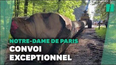 Ces Chenes Vont Devenir La Fleche De Notre Dame De Paris V5Kggohjguo Image