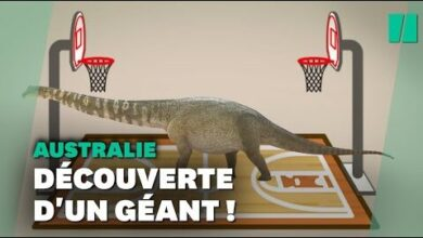 Le Plus Grand Dinosaure Decouvert En Australie Est Aussi Long Quun Terrain De Basket Wdam50Jcupu Image