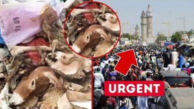 Urgent Touba Safinatoul Amane Confisque Des Outils Interdit A La Ville Saint 2988Qq7Mqrc Image