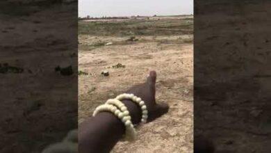04 Terrains De 150M2 A 2Millions Par Terrain Alors Nhesitez Pas 77 518 45 40 Whatsapp Uniquement Tnrnwjyuyci Image
