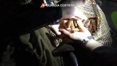 Grupo Detido Em Italia Por Pesca Ilegal De Marisco Doxx8Ps 8Bc Image