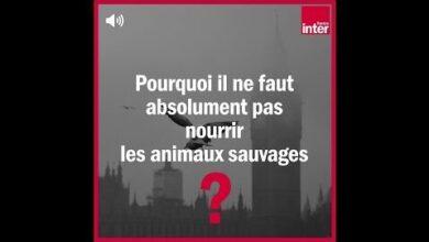 Pourquoi Il Ne Faut Pas Nourrir Les Animaux Sauvages La Chronique Environnement Pk6Jpozexwa Image