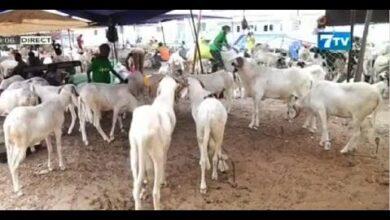 Tabaski Au Senegal Une Fete Sous Pression Two8Scu Kdy Image