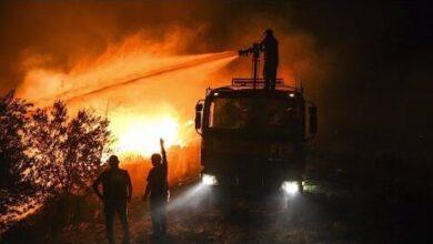 Vaga De Calor Da Combustivel A Incendios Florestais Fqis2Snlkno Image