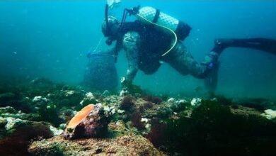 Caracois Marinhos O Tesouro Insustentavel Do Mar Negro Ae6Ld0Zfslk Image