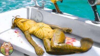 Creatures Etranges Decouvertes Recemment En Thailande Gk4Atr5Bgug Image