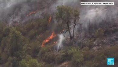 Incendies En Algerie Le Pays En Deuil La Lutte Contre Les Flammes Sorganise O France 24 Gqeynv1Mk 8 Image