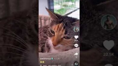 Le Chat A Tibo A Fait Pipi Par Terre Nouveau Tiktok W5Exkjnmur8 Image