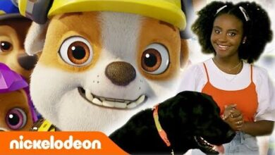 Paw Patrol La Pat Patrouille Orange Carpet Edition Speciale Nickelodeon France 8Xau5Chzm 8 Image