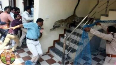 Ce Tigre A Attaque Les Gens Dans Une Ecole Ygbfnulhvd4 Image