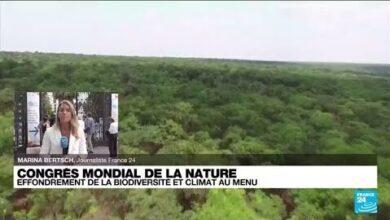 Congres Mondial De La Nature Effondrement De La Biodiversite Et Climat Au Menu O France 24 Ozdc5Igp Aq Image