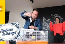 Maak Dat De Kat Wijs Als De Kat Van Huis Is Dansen De Muizen Op Tafel Gzwd H9Ux7U Image